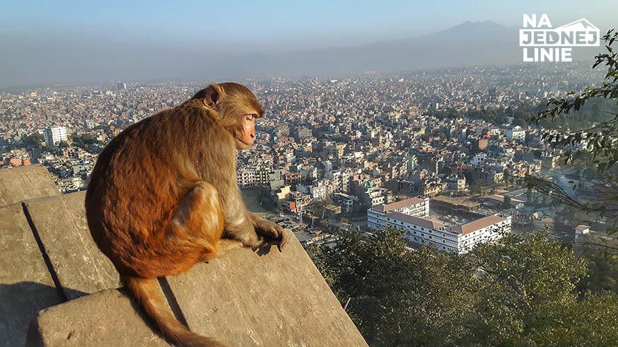 Monkey Temple w Kathmandu i gang rzezimieszków